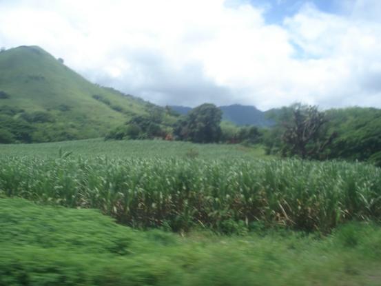 丘陵とサトウキビ畑.JPG